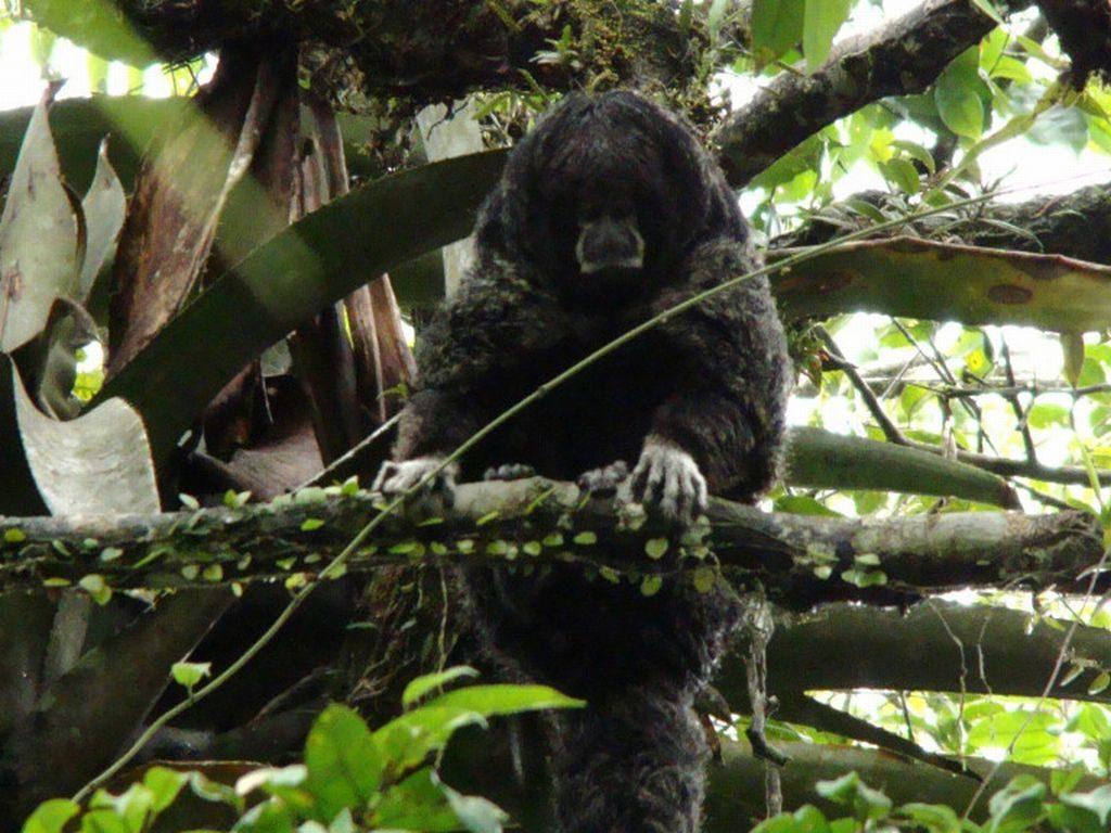 Wolaap #ecuadorrondreizen Nicky Amazone tour