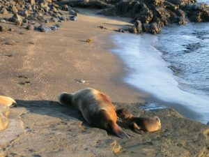 Zeeleeuw met baby wildlife op de Galapagos Eilanden
