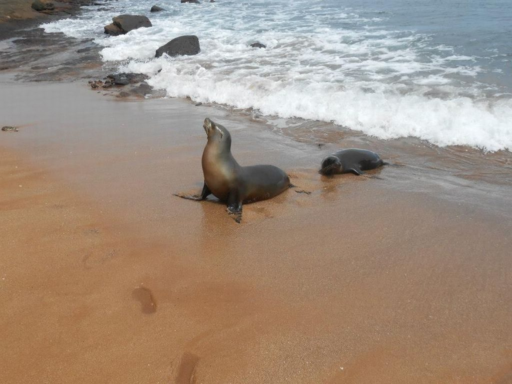 Zeeleeuwen Galapagos Eilanden tour Ecuador