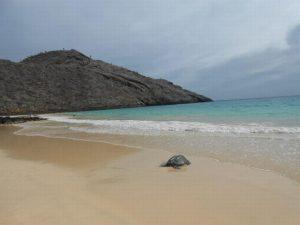 Schildpad op het strand van de Galapagos in Ecuador