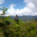 Wandelen in Vilcabamba Ecuador