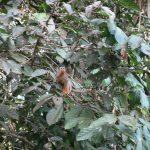 Doodshoofdaapje in Amazone oerwoud