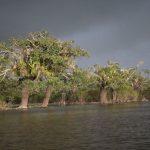 Ondergelopen oerwoud in Cuyabeno wildlife reservaat