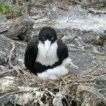Vogel met pul op de Galapagos