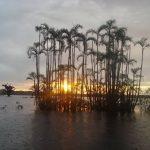 Zonsondergang in Cuyabeno Amazone Reservaat Ecuador