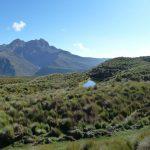 Vicuña trektocht rondreizen op maat in Ecuador