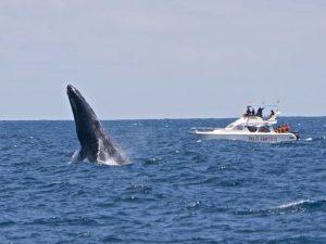 Walvis spotten in Ecuador